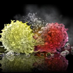Cancer Assassin: Killer TCell Attacks Cancer Cell